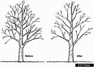 comparaison entre l'élagage d'un arbre et la méthode du pruning